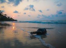 Oude flessen op het strand tijdens zonsopgang, Rayong, Thailand Royalty-vrije Stock Foto's