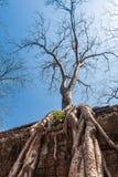 Oude galerij van de verbazende die tempel van Ta Prohm met bomen wordt overwoekerd Geheimzinnige die ruïnes van Ta Prohm onder re Stock Foto's