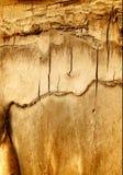 Oude gebarsten schors van boom. Stock Afbeeldingen