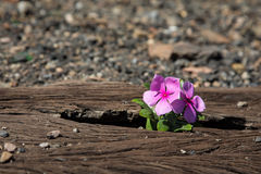 Oude gebruikte spoorwegsporen binnen en kleine bloem in kleur Stock Foto