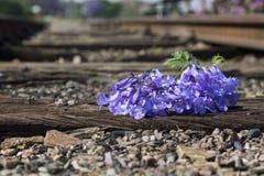 Oude gebruikte spoorwegsporen binnen en kleine bloem in kleur Royalty-vrije Stock Afbeeldingen