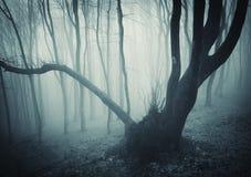 Oude geheimzinnige boom in een donker bos royalty-vrije stock afbeeldingen