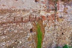 Oude geheimzinnige muur met vastklampende wijnstokken stock foto