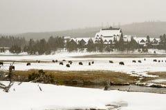 Oude Gelovige Herberg met het weiden van bizon of buffels in Hogere Geiser B stock foto