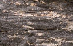 Oude geschilderde houten raad Royalty-vrije Stock Fotografie