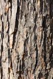 Oude geschilderde houten textuur Stock Foto