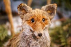 Oude gevulde rode vos Close-up Herinnert aan een gestenigd dier stock foto