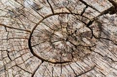 Oude gezaagde boom met jaarlijkse de groeiringen en barsten Stock Foto's