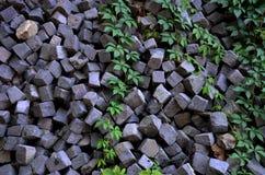 Oude graniethoop met groene vagetation Royalty-vrije Stock Afbeelding