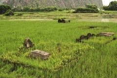 Oude graven in Ninh Binh vietnam royalty-vrije stock foto's