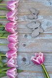 Oude grijze blauwe houten achtergrond met roze witte tulpengrens op een rij en lege exemplaarruimte met de houten vlinders van de Stock Foto's