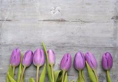 Oude grijze houten achtergrond met purpere witte tulpen, sneeuwklokje en krokusgrens op een rij en lege exemplaarruimte, het deco Stock Afbeeldingen