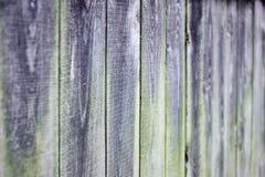 Oude grijze houten raad, groenachtig mos stock afbeelding