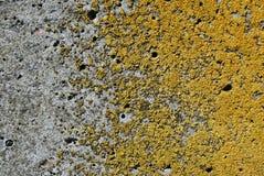 Oude grijze ruwe textuur concrete muur met geel mos, grunge horizontale textuur royalty-vrije stock fotografie