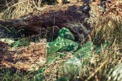Oude groene plastic die flessen in het gras worden gedumpt Royalty-vrije Stock Foto