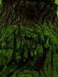 Oude groene schors Royalty-vrije Stock Afbeelding