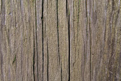 Oude groene verf op de boom Stock Afbeelding