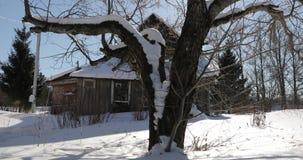 Oude grote boom dichtbij oud huis in de winter stock video