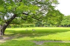 Oude grote boom onder colud en blauwe hemel Royalty-vrije Stock Afbeelding