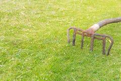 Oude hark op het gras Stock Afbeeldingen
