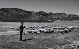 Oude herder en zijn schapen op Macin-bergengebied, Roemenië Royalty-vrije Stock Fotografie