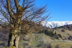 Oude holle boom met bergen op de achtergrond Royalty-vrije Stock Foto's