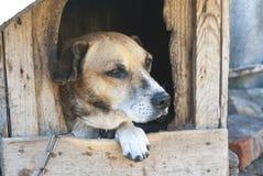 Oude hond in een cabine stock fotografie