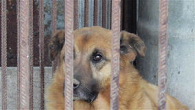 Oude hond in een kooi stock video