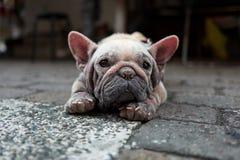 Oude hond op de straten van Kaohsiung in Taiwan royalty-vrije stock afbeeldingen