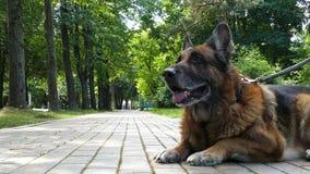 Oude hond in openlucht stock videobeelden