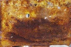 Oude honingraat tegen zonlicht Royalty-vrije Stock Afbeelding