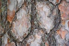 Oude houten achtergrond, interessante textuur, kleuren Stock Afbeelding