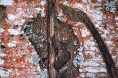 Oude houten achtergrond, interessante textuur, kleuren Royalty-vrije Stock Afbeelding