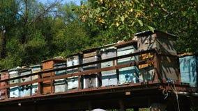 Oude houten bijenkorven stock footage