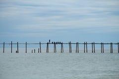 Oude houten brug die het overzees in duidelijke dag overspannen Royalty-vrije Stock Afbeeldingen