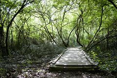Oude houten brug in het midden van een bos Stock Afbeelding