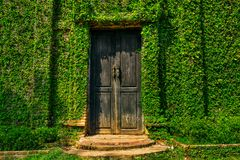 Oude houten deur in de muur Royalty-vrije Stock Fotografie