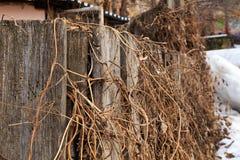 Oude houten die omheining met het droge gras van vorig jaar wordt ineengestrengeld royalty-vrije stock foto
