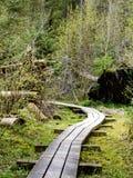 Oude houten die promenade met bladeren in oud bos wordt behandeld Stock Afbeelding