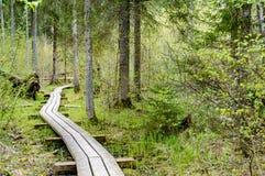 Oude houten die promenade met bladeren in oud bos wordt behandeld Stock Fotografie
