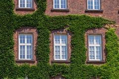 Oude houten die vensters door Klimop op huisvoorgevel worden overwoekerd stock fotografie