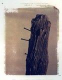 Oude houten omheiningspost met spijkers Royalty-vrije Stock Afbeeldingen