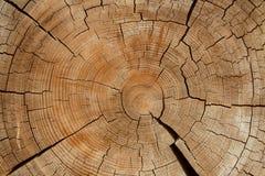 Oude houten opent sectie het programma Stock Foto's
