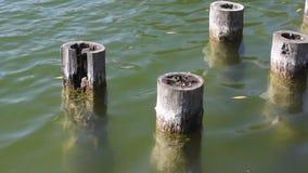 Oude houten pijlers in water stock videobeelden