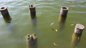Oude houten pijlers in water stock footage