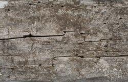 Oude houten raad royalty-vrije stock afbeeldingen