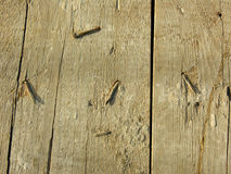 Oude houten raad met geroeste spijkers Royalty-vrije Stock Fotografie