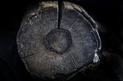 Oude houten ringentextuur Stock Afbeeldingen