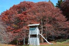 Oude houten spelen voor kinderen dichtbij het de herfstbos royalty-vrije stock foto's