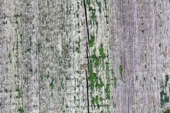 Oude houten textuur met groene verf De organische achtergrond van de patroon houten tegel, oude planking muur Rijpe zaden van gra royalty-vrije stock fotografie